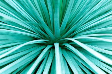 photo of botanical flower, blue green background