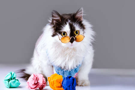 cat with glasses near to colorful crumpled paper, concept of bad ideas Imagens