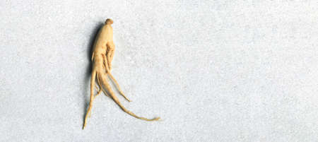 ginseng on a light background, panoramic mock-up with space for text