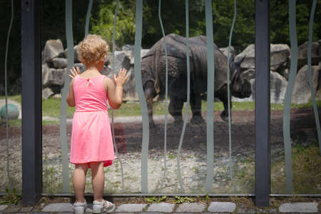 little girl looks at a rhino in the reserve Banque d'images