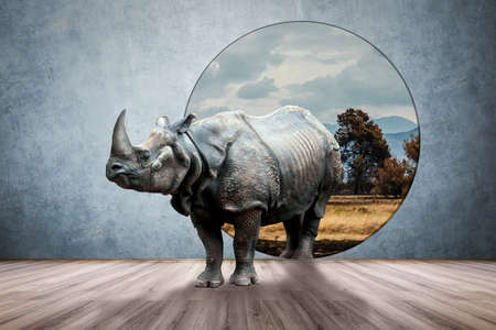 Rhino in the room, photo and media mixed creative concept