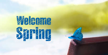 Exotic blue butterfly, welcome spring concept, panoramic image