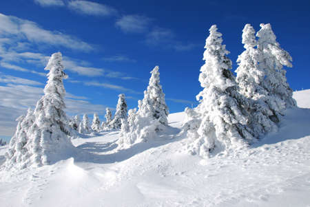 Winter trees under the snow photo