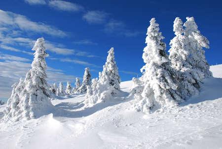 눈 아래 겨울 나무
