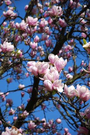 prime: spring april prime flowers tree