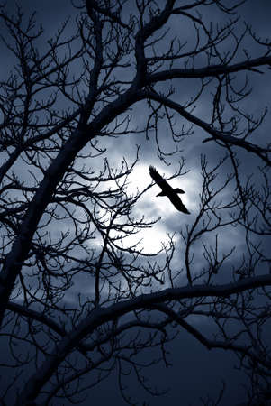 scarry: raven flying in the dard night