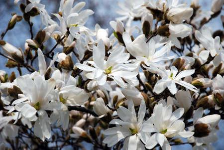 prime: spring prime flowers buds tree