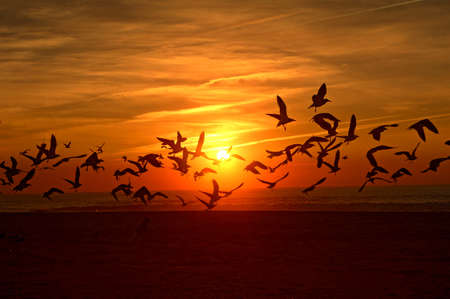 Birds flying into the sunset, Espinho beach, Portugal photo