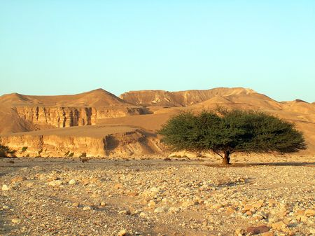 eilat: The lonly in the Arava