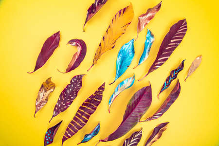 Vibrant vivid red, blue and yellow colored acrylic painted leaves on yelow background texture. Flat lay background. Banco de Imagens