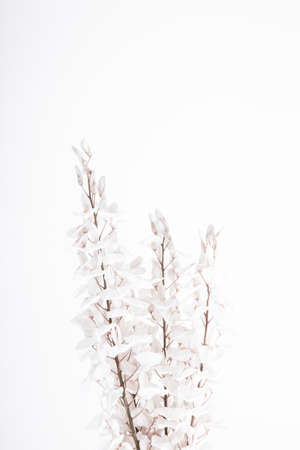 White wisteria bunch flower on beige background. Imagens