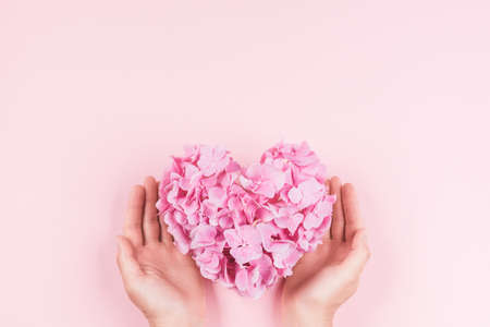Hands holding bouquet of pink heart shaped hydrangea flower on pink background.