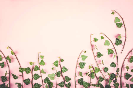Composition of green leaves bunches on pink background. Flat lay style. Imagens