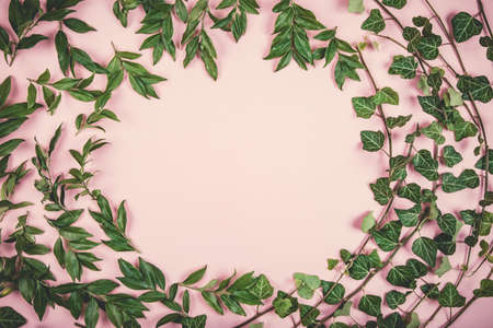 Composition of green leaves round shape copy space on pink background. Flat lay style. Imagens