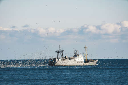 Fishing boat trawling in the Black Sea surrounded by a mass of seagulfs.