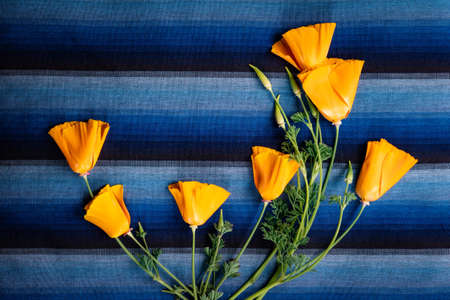 Bright orange flowers on a blue striped background. Holiday card. 免版税图像