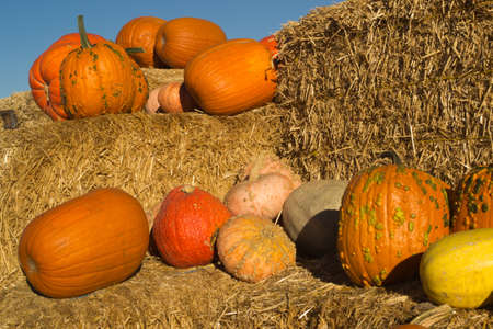 loosely: Fall harvest of pumpkins, squashes,  and gourds loosely displayed on hay pile on a sunny day Stock Photo