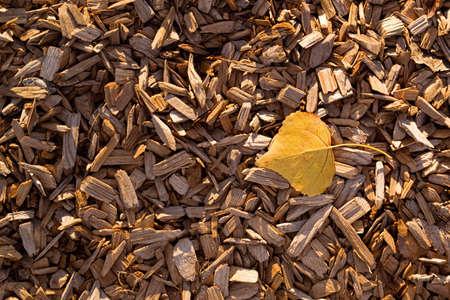 bark mulch: A yellow poplar tree leaf rests on brown wood chip mulch