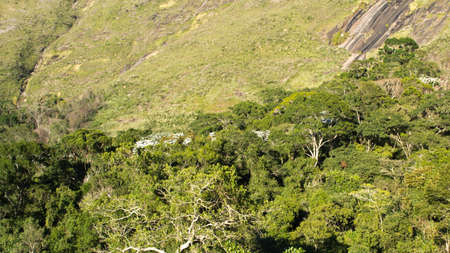 deforested: Secondary forest growing in the Atlantic Forest domain in Petropolis, Rio de Janeiro, Brazil.