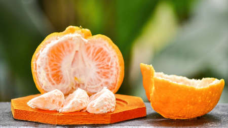 reticulata: Sectioned, partly pealed mandarin fruit variety ponkan against green background