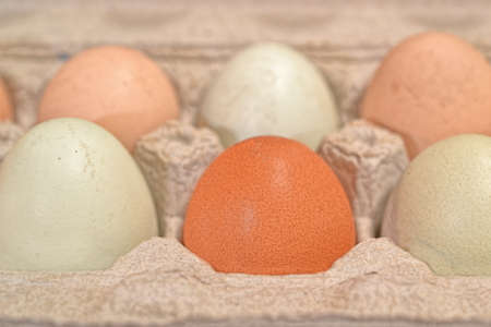 unwashed: Closeup on group of unwashed chicken eggs in open carton Stock Photo