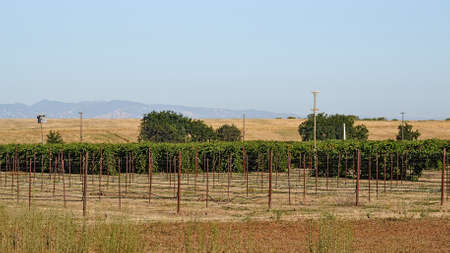 winters: View of UC Davis extension vineyard in Davis, with mountains in the background and hazy skies due to Cold Fire in Winters, California, USA
