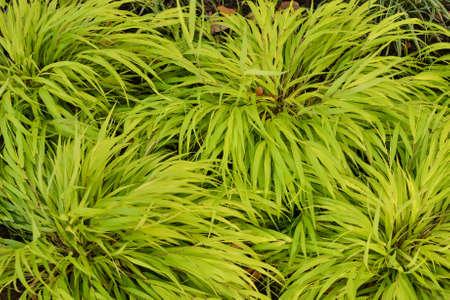 緑豊かな緑の草テクスチャや背景