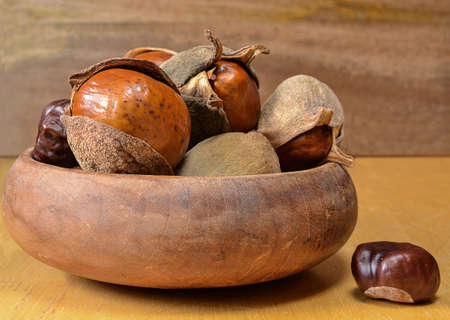 horse chestnut seed: A bunch of buckwheat seeds in wooden bowl on wooden background. Native Americans used the poison of this seed to hunt and as alternative food supply after detoxification