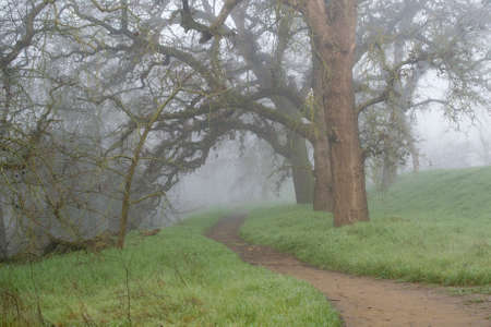 riparian: A foggy trail in the woods of Northern California, in the winter, displaying leafless oak trees and green grass- uncertainty concept