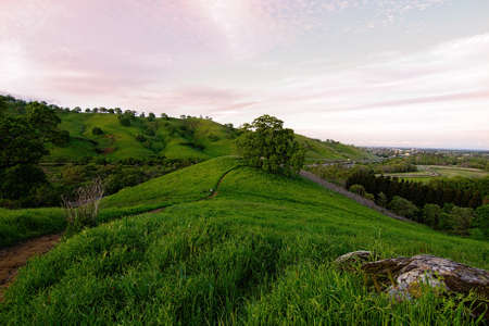 Panoramic view of the Lagoon Valley Park in Vacaville, California, USA, featuring a pasture in the winter with green grass, the city of Vacaville at a distance, and an oak tree in the sunset