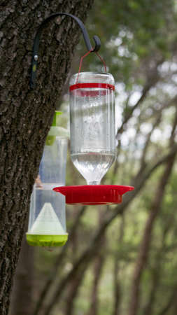 Selective focus on generic red bird feeder, with wasp trap in the background, hung outdoors to feed birds and trap  Yellow Jacket