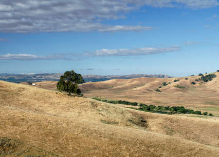 Panoramic view of the Lagoon Valley Park in Vacaville, California, USA, featuring the chaparral in the summer with golden grass, viewed on the way to the cell phone tower