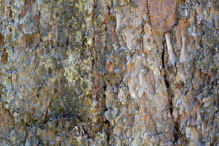 The bark of a giant sequoia, Sequoiadendron giganteum- texture or background