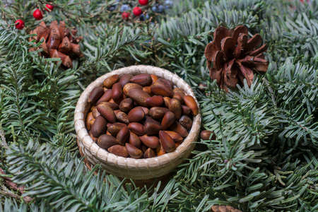 Pine nuts in woven basket surrounded by green fir leaves decorative pine cones and red toyon seeds- christmas food concept