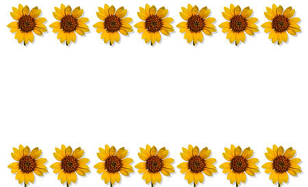 Seven identical sunflowers at the base and top of a rectangular white background ideal for summer and happy subjects- large copyspace Stock Photo