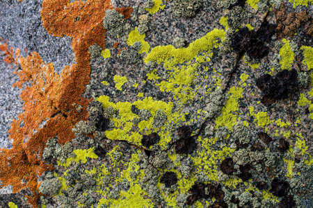 Rock covered with moss and lichen pattern in the colors orange, green, black and brown- texture or background