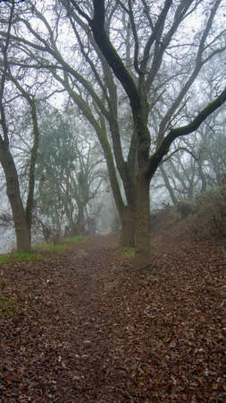 A foggy path in the woods of the UC Davis Riparian Preserve, in the winter, displaying leafless trees and a foggy way ahead- uncertainty concept
