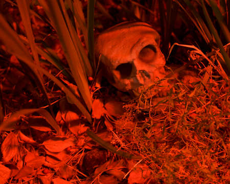 A skull among weeds on the ground suggesting a dead person- spooky halloween decoration in red cast