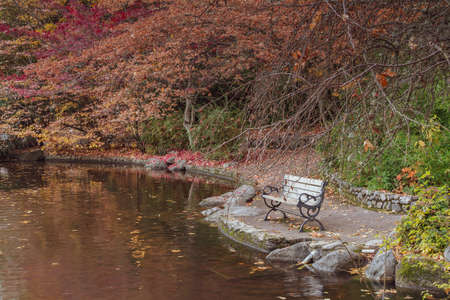 Empty bench at Lithia Park by the lake in Ashland, Oregon, USA, featuring red and yellow leaves in the Autumn