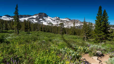 Trail to Frogg Lake from Kit Karson  in the spring,  featuring mostly melted snow packs , wildflowers and coniferous trees on a cloudless, blue sky day Stok Fotoğraf