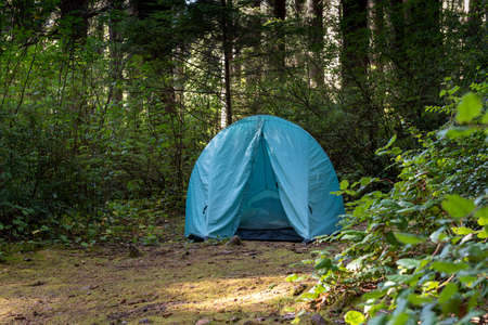 Blue iglu tent set in Humboldt County campground, California, among coniferous trees, in the summer, photographed during the day