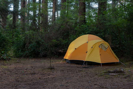 Yellow iglu tent set in Humboldt County campground, California, among coniferous trees, in the summer, photographed during the day and viewed from a distance