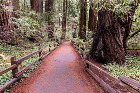 The path at  Muir Woods National Monument, California, USA  Stok Fotoğraf