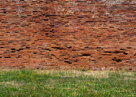 Background consisting of brown brick wall and grass foreground with flowering daisies in the spring Stok Fotoğraf