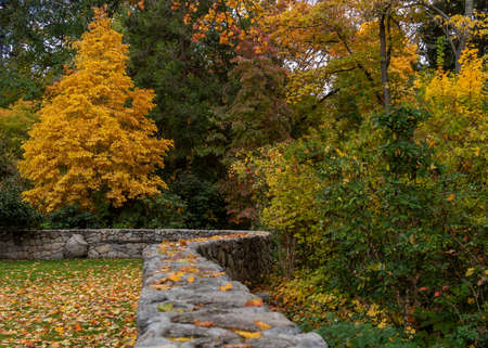 Leading line from a wall at Lithia Park  in Ashland, Oregon, USA, featuring yellow leaves in the Autumn. Ashland is the home of the Shakespeare Festival  Standard-Bild