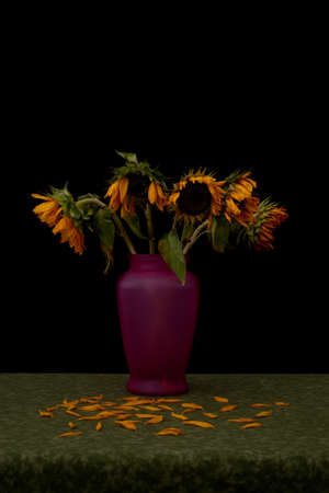 Still life portraying dead wilting sunflowers against black background shedding their petals onto green tablecloth, illustrating the concept of aging