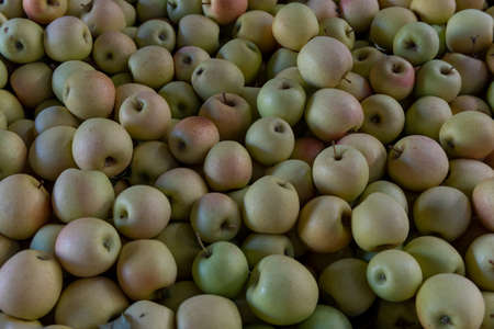 Golden Delicious apples, originally from West Virginia, for sale in Apple HIlls, Northern California, in open market , background or backdrop 免版税图像