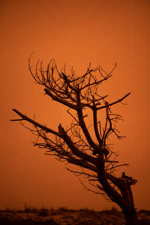 Dead tree against the orange sky due to the Dolan fire in the Big Sur, during the fire season of 2020 Stockfoto - 156111438