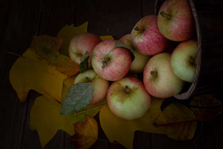 Close-up on honey Crisp apples  from Apple Hills, Northern California, inside a wooden bucket on wooden table covered with yellow cottonwood leaves against brown background and viewed from above Stockfoto