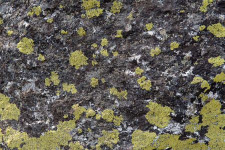 Rock covered with moss and lichen pattern in the colors green, black and white- texture or background Stockfoto